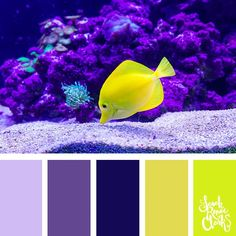 High contrast yellow and purple color palette | 25 color palettes inspired by the PANTONE color trend predictions for Spring 2018 – Use these color schemes as inspiration for your next colorful project! Check out more color schemes at www.sarahrenaeclark.com #color #colorpalette