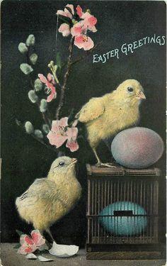 Easter Greetings Chicks Pink Blue Eggs Cage Flowers Vintage Postcard | eBay