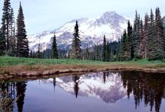 MT. RAINIER - Wonderland Trail Sections.  Starting with Hiking from Longmire to Devil's Dream on the Wonderland Trail.  The Wonderland Trail Guide.  93 miles.  National Park Pass required.
