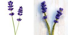 Crochet Arcade Pattern Designs: Crochet Flower Pattern Day 1 - Lavender