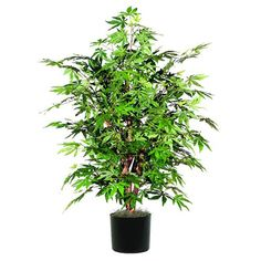 Vickerman 4' Artificial Japanese Maple Extra Full set in Black Pot -- Visit the image link more details.