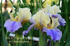 Soft Cover.  Stout Gardens.  Compare to Edith Wolford.