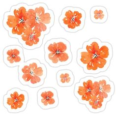 Cute little orange handpainted watercolor flowers as a sticker set or pack to decorate your ipad, laptop, waterbotlle or car :) Journal Stickers, Scrapbook Stickers, Printable Stickers, Cute Stickers, Tumblr Stickers, Bullet Journal Ideas Pages, Aesthetic Stickers, Transparent Stickers, Watercolor Flowers
