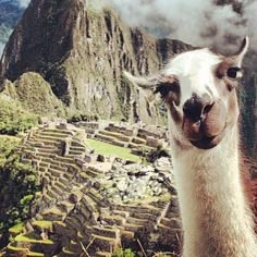 Help vote my picture as Instacanvas photo of the week! Welcome to Machu Picchu by Bossy the Llama!