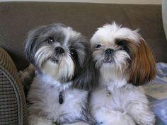 Precious fur babies