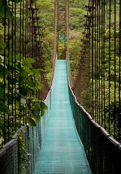 Walk across a bridge along the treetop canopy in Costa Rica Costa Rica, Experience Gifts, Travel Magazines, Outdoor Life, Brooklyn Bridge, National Geographic, The Great Outdoors, Paths, National Parks