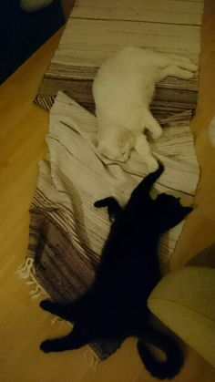 Simon and Luna...paw against paw  :)