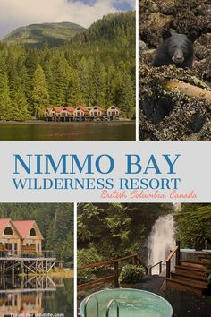 Experience the Great Bear Rainforest while staying at Nimmo Bay a luxury resort. Go whale watching bear watching snorkeling in the Great Bear Sea kayaking heli hiking! Explore the canadian wilderness at Nimmo Bay. Quebec, Calgary, Canadian Travel, European Travel, European Vacation, Toronto, Whistler, Vancouver Island, Banff