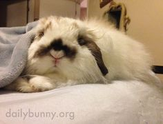 Bunny is comfy and does not want to get up yet - March 9, 2015 - More at today's Daily Bunny post: http://dailybunny.org/2015/03/09/bunny-is-comfy-and-does-not-want-to-get-up-yet/ !
