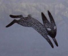 Detail Black Rabbit of Inlé