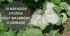 10 nápadov využitia sódy bikarbóny v záhrade, o ktorých ste možno nevedeli Pest Control, Beautiful Gardens, Organic Gardening, Plant Leaves, Remedies, Vegetables, Flowers, Amazing, Diy