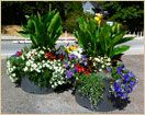 Beautiful flowers in our Millennium Series Self-Watering Planters!