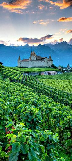 The vineyards of Chateau D'Aigle, Switzerland. Aigle Castle is in the municipality of Eagle of the Canton of Vaud. It is a Swiss heritage site of national significance. Places Around The World, Oh The Places You'll Go, Travel Around The World, Places To Travel, Places To Visit, Travel Destinations, Beautiful World, Beautiful Places, Foto Picture