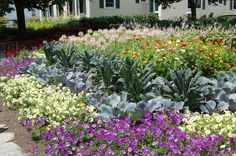 Are you starting to plan your fall flower garden? Don't overlook the potential offered by flowering kale and cabbage. Here are some more tips to ensure that your autumn landscape will look its best: http://landscaping.about.com/cs/landscapecolor/a/fall_flowers.htm