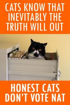 Honest cats don't vote Nat