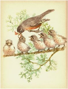 Robin and five hungry babies on a juniper branch. (Go to the blog page to access a larger size of this picture.)