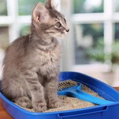 Cat Nutrition Health Con: You're on the Hook for Training Your Kitten - Cat Diet, Dry Cat Food, How To Eat Less, Litter Box, Types Of Food, Cat Breeds, Health And Nutrition, Cat Love, Cool Cats