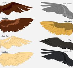 SnK Wings (2/2) by Fayolinn on DeviantArt