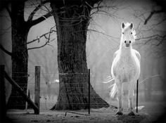 horses are amazing All The Pretty Horses, White Horses, Train Rides, Horse Love, Pretty Pictures, That Way, Animal Pictures, Pony, Nature Photography