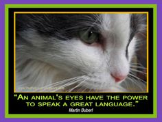 An Animals Eyes Has The Power To Speak A Great Language
