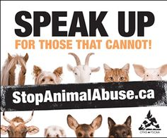 im against animal abuse | Not doing anything to them is the best thing to the nature of animals.