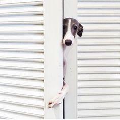 Hi, whatchya doing?