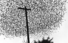 Pájaros En El Poste by Graciela Iturbide on Curiator - http://crtr.co/ejr.p