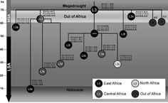 L3 Haplotype - Yahoo Image Search Results