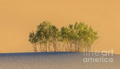 Life in the Desert Death Valley National Park by Henk Meijer