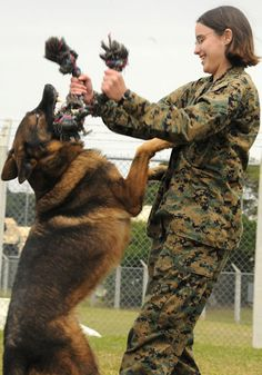 Military dogs are the best