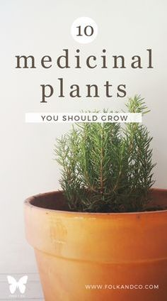 Medicinal Plants You Should Grow - The more I learn about plants the more I 10 Medicinal Plants You Should Grow -- The more I learn about plants the more I. Medicinal Plants You Should Grow -- The more I learn about plants the more I. Herb Garden, Vegetable Garden, Garden Plants, Garden Shade, Garden Art, Healing Herbs, Medicinal Plants, Organic Gardening Tips, Gardening Blogs