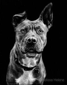Lola | Melissa Helene Fine Arts 8x10 scratchboard pet portrait www.melissahelene.com