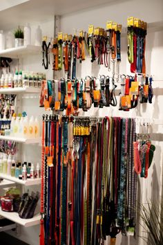 Stunt Puppy Collars and Leashes - a local company that makes hands-free gear for the active dog. Available at Bubbly Paws