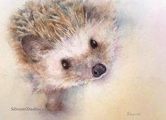 My hedgehog watercolor is available as a cute art print and greeting cards.  Woodland animal prints are perfect for wildlife art lovers, in addition to nursery decor and wall art!  To view more animal art by Teresa Silvestri, visit www.SilvestriStudios.com