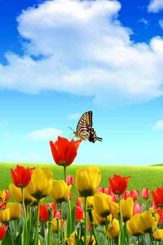 Butterfly and tulips image via WallpapersHD