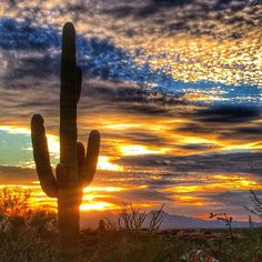 Tucson desert singles