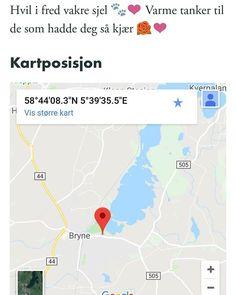 Gråbrunsvartspraglet katt funnet i Alvevegen Rogaland. (link: http://dyrebar.no/72837/) dyrebar.no/72837/ #katt #funnet  Gråbrunsvartspraglet katt funnet i Time  16.03.2018 19:15