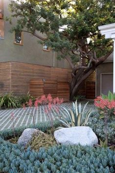 Permeable Driveway w nice agave and senecio Gabriela Yariv Landscape Design Santa Monica, CA