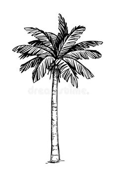 Illustration about Hand drawn vector illustration of coconut palm tree. Illustration of travel, beach, engraving - 94527044 Tree Drawing Simple, Palm Tree Drawing, Palm Tree Art, Palm Trees, Palm Tree Vector, Palm Tree Sketch, Tree Sketches, Hand Doodles, Flower Doodles