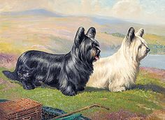 Megargee's famous #Skye #Terriers by Nick Waters Terriers, Skye Terrier, Terrier Dog Breeds, Dogs Of The World, Dog Art, Welsh, I Love Dogs, Newspaper, Countryside