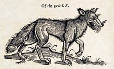 Topsell's The History of Four-footed Beasts and Serpents Woodcuts: Wolf Medieval Drawings, Medieval Art, Maleficarum, Dark Drawings, Ange Demon, Skeleton Art, Tattoo Flash Art, Middle Ages, Dark Art