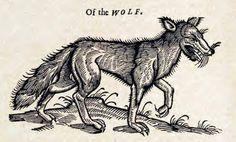 Wolf, 1658