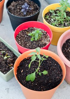 Helpful Guide! How to Plant a Successful Container Garden.      Design Mom