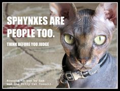 Sphynx cats are people too, at least if you ask Lux. Also, stop calling her ugly!