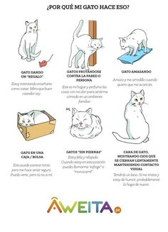 Cuando tu gato te trae un regalo, te está mostrando qué bueno es cazando. Quiere que se lo celebres. | 12 Infográficos prácticos que todo amante de los gatos necesita