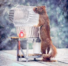 A Squirrel's Day  Nancy Rose takes adorable photos of the squirrels ❄ particularly two: Mr. Peanuts and Mrs P - in her backyard. She buys props and strategically places peanuts in them to capture them in some cute photos.
