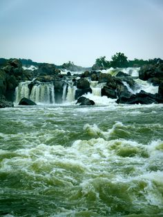 Great Falls, VA, Will never forget the look on Dads face when we first toom them here.......