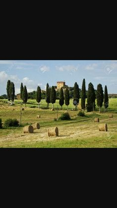 Vineyard, Golf Courses, Outdoor, Images, Tuscany Italy, Search, Outdoors, Vine Yard, Vineyard Vines