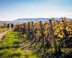 pinot grigio italian wine