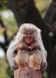 New ideas baby animals monkey pets The Animals, Cute Baby Animals, Funny Animals, Monkeys Animals, Primates, Mammals, Cute Creatures, Beautiful Creatures, Animals Beautiful